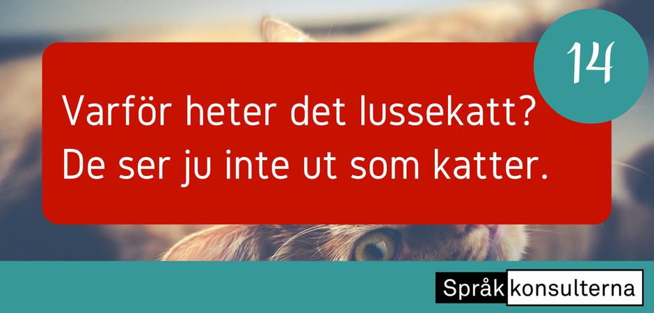 Lucka 14: Varför heter det lussekatt? De ser ju inte ut som katter.