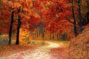 En gångväg omgiven av träd med röda höstlöv.